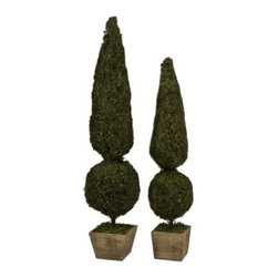 Mossy Sphere Topiary - Set of 2 - The Mossy Sphere Topiary - Set of 2 are elegant when placed together on the floor or you can use them to create a dramatic tabletop centerpiece. Either way this set of two topiaries will add a warm natural touch to your home. Each one is placed in a rustic wood box and covered with faux moss. These topiaries are designed for indoor use.About IMAXWhat began as a small company importing copper flower containers in 1984 by Al and Faye Bulak has developed into one of the top U.S. import companies serving the At Home market today. IMAX now provides home and garden accessories imported from twelve countries around the world housed in a 500 000 square foot distribution center. Additional sourcing product development and showroom facilities in the USA India and China make IMAX a true global source. They're dedicated to providing products designed to meet your needs. This is achieved through a design and product development team that pushes creativity taste and fashion trends - layering styles periods textures and regions of the world - to create a visually delightful and meaningful environment. At IMAX they believe style integrity and great design can make living easier.