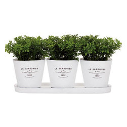 Round Planters On Tray - This is the perfect set of round planters for an indoor herb garden.