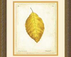Amanti Art - Beech Leaf Framed Print by Meg Page - Meg Page's leaves are a nostalgic reminder of autumn leaves preserved in wax paper, the spirit of fall captured in each gloriously colored leaf.