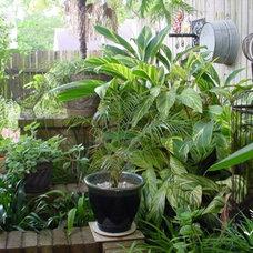 Tropical  by Sharon Johnson Lott