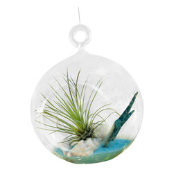 Air Plant Company - Hairy Glass Terrarium - Hairy Glass Terrarium