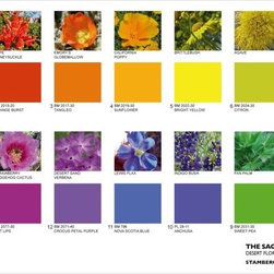 The Saguaro Palm Springs' color palette - Saguaro Pal Springs color palette
