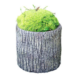 """Cypress Cement Container Round - 7.5"""" x 8"""" - Rich, naturalistic texture gives depth to the simple cylindrical form of this Cypress Cement Container, a concrete planter in a useful size and updated shape. Stained a long-wearing dark brown, the construction of the bark takes on a multitude of woodland shades for a rustic look that makes no distinction among styles, but fits with clear suitability in any exterior landscape."""