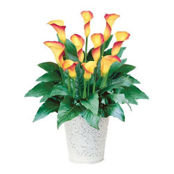 "Calla ""Flame"" - Calla Lilies are one of my favorite plants. This particular color is a stunning way to bring color into a room that will keep giving back. The ceramic planter compliments the plant."