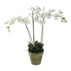 Phalaenopsis Orchids in Pot, 3 Stems, White