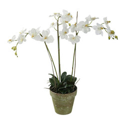 "Jane Seymour Botanicals - Phalaenopsis Orchids in Pot, 3 Stems, White - Ah, the orchid! So desirable, so delicate — so difficult to cultivate. Luckily, these pure white ""forever flowers"" are remarkably realistic in every sense, except they'll never lose a single petal."