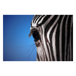 Custom Photo Factory - Zebra Face Canvas Wall Art - Zebra Face  Size: 20 Inches x 30 Inches . Ready to Hang on 1.5 Inch Thick Wooden Frame. 30 Day Money Back Guarantee. Made in America-Los Angeles, CA. High Quality, Archival Museum Grade Canvas. Will last 150 Plus Years Without Fading. High quality canvas art print using archival inks and museum grade canvas. Archival quality canvas print will last over 150 years without fading. Canvas reproduction comes in different sizes. Gallery-wrapped style: the entire print is wrapped around 1.5 inch thick wooden frame. We use the highest quality pine wood available. By purchasing this canvas art photo, you agree it's for personal use only and it's not for republication, re-transmission, reproduction or other use.