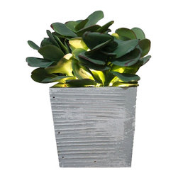The Firefly Garden - Lumiere - Illuminated Succulents, Kalanchoe in Wood Box - Lumiere is a subtle accent light that blends well with any d̩cor. Designed for a side tables, small nooks, or as a bathroom night light, this arrangement measures 8 inches. It also makes for a perfect gift item alone or in multiples. Available in a variety of succulent and vase combinations. Comes with Lithium Coin 3V battery.