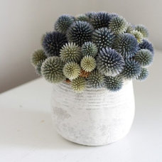 Modern Plants by Etsy