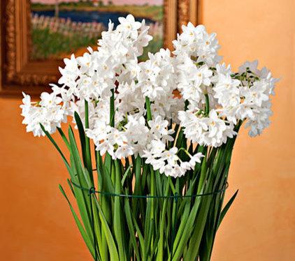 Home Decor by White Flower Farm