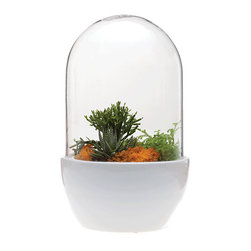Pill Terrarium - White - Show off your favorite succulents, cacti, and terrarium sculptures while adding a pop of color to your living space. The cylinder terrarium includes a bright ceramic base and clear glass dome. The size and height are perfect for a variety of plants!