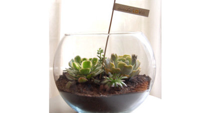 eclectic plants by succulentlovedesigns.bigcartel.com