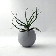 Plants Mini Air Plant Pod, Gray, by Seaandasters