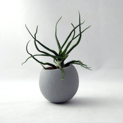 Plants Mini Air Plant Pod, Gray, by Seaandasters