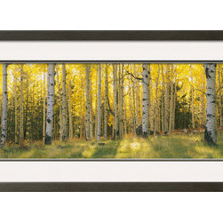 Artcom - Aspen Trees in Coconino National Forest, Arizona, USA by  Panoramic Images - Aspen Trees in Coconino National Forest, Arizona, USA by  Panoramic Images is a Framed Photographic Print set with a SOHO Gray wood frame and Crisp - Bright White and Charcoal matting.