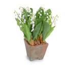 New Growth Designs - Lily of the Valley - Bring botanical beauty to your home with this charming Lily of the Valley plant. Potted in a lovely square natural clay pot, this lovely bell shaped flowering plant will add calm and elegance to your decor.