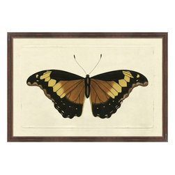 Wendover Art - Naturalists Moth Brown - This striking Giclee on Paper print adds subtle style to any space. A beautifully framed piece of art has a huge impact on a room for relatively low cost! Many designers and home owners select art first and plan decor around it or you can add artwork to your space as a finishing touch. This spectacular print really draws your eye and can create a focal point over a piece of furniture or above a mantel. In a large room or on a large wall, combine multiple works of art to in the same style or color range to create a cohesive and stylish space!