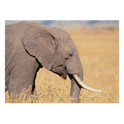 Custom Photo Factory - Elephant in the Fields Canvas Wall Art - Elephant in the Fields  Size: 20 Inches x 30 Inches . Ready to Hang on 1.5 Inch Thick Wooden Frame. 30 Day Money Back Guarantee. Made in America-Los Angeles, CA. High Quality, Archival Museum Grade Canvas. Will last 150 Plus Years Without Fading. High quality canvas art print using archival inks and museum grade canvas. Archival quality canvas print will last over 150 years without fading. Canvas reproduction comes in different sizes. Gallery-wrapped style: the entire print is wrapped around 1.5 inch thick wooden frame. We use the highest quality pine wood available. By purchasing this canvas art photo, you agree it's for personal use only and it's not for republication, re-transmission, reproduction or other use.