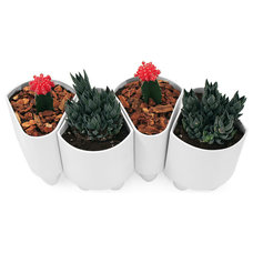 Contemporary Indoor Pots And Planters by UncommonGoods