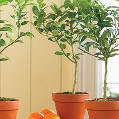 traditional plants by Williams-Sonoma