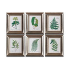 Uttermost - Uttermost 33592  Ferns Framed Art Set/6 - Prints are accented by frames with a champagne silver leaf base, brown and black wash and gray glaze. prints are under glass.