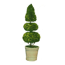 None - Floral Mills Preserved Boxwood Sphere and Cone Topiary - The Floral Mills Boxwood topiary is made from real boxwood that is sure to last for years. Highlighting a spherical and conic shape boxwood design,this decorative piece can be used to uplift any indoor or outdoor setting.