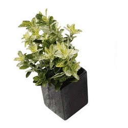 Off the Wall Pot, Small, Black, Small - These bold stoneware wall planters will liven up any room and delight guests. Planters feature invisible wall fixtures and are perfect for cacti or succulents.