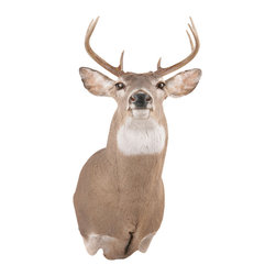 Walls Need Love - Buck, Adhesive Wall Decal - Out of the lodge and into your home, the regal buck is the proud star of this decoration. It showcases its powerful antlers, wide ears and smooth coat.