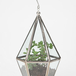 Faceted Terrarium - My main concern about my kitchen is that it looks a bit drab because it doesn't get much sun. Plants inject instant life and oxygen into a room, so that problem is solved with this terrarium. Also, I love the idea of hanging stuff from the kitchen ceiling because I feel all the attention stops where the cabinets end.