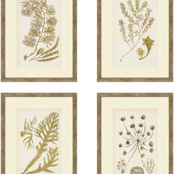 """Paragon Decor - Sea I, Set of 4 Artwork - Liven up those boring walls with this coastal set. """"Sea I"""" includes four portraits of seaweed branches and details. These pieces can be hung vertically, horizontally, diagonally, or any other shape your heart desires! Each piece in this set is surrounded by a cr�me-colored matte and a thin simple beach-inspired frame. Each piece in this set measures 13 inches wide, 1 inch deep, and 18 inches high."""