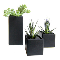 LushModern - Lush Cube Trio - Line them up or spread them out—these 3 ceramic cubes will add a touch of modernity to your home or office. Vibrant green leaves contrast the stylish matte black finish to create a distinctive look.