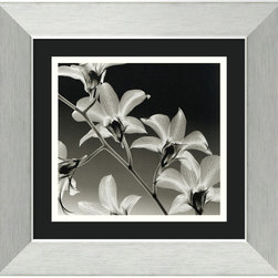 Amanti Art - Orchid Denrobium Framed Print by Steven N. Meyers - Wild Flowers. This is no hothouse orchid. Your new print of Denrobium orchids is created using special x-ray technology to illuminate the grace and elegance of each bloom.