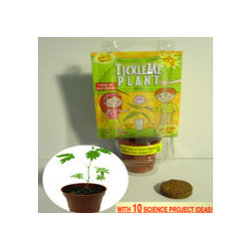 Best Green Party Favor Ever - Ever See A House Plant MoVe When You Tickle It? Now your guest can easily grow a real house plant that Moves and closes its leaves when Tickled . See video