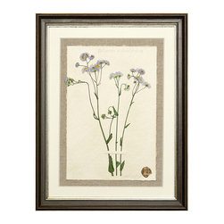 Botanicals Flowers N - Tiny Purple - Framed - A stunning framed display of a flattened botanical specimen with many different options available to suit your mood or d�cor. Each specimen is one of a kind and no two will be alike. For those who desire uniqueness in their wall hangings, the Botanicals Collection can be placed in a room alone or with many clustered together for wonderful way to bring your love of nature indoors.