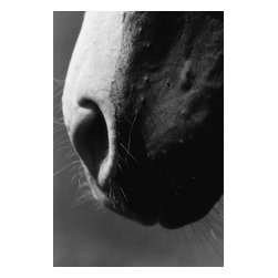 Custom Photo Factory - Horse's Nose Canvas Wall Art - Horse's Nose  Size: 20 Inches x 30 Inches . Ready to Hang on 1.5 Inch Thick Wooden Frame. 30 Day Money Back Guarantee. Made in America-Los Angeles, CA. High Quality, Archival Museum Grade Canvas. Will last 150 Plus Years Without Fading. High quality canvas art print using archival inks and museum grade canvas. Archival quality canvas print will last over 150 years without fading. Canvas reproduction comes in different sizes. Gallery-wrapped style: the entire print is wrapped around 1.5 inch thick wooden frame. We use the highest quality pine wood available. By purchasing this canvas art photo, you agree it's for personal use only and it's not for republication, re-transmission, reproduction or other use.