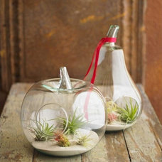 Contemporary Terrariums by VivaTerra