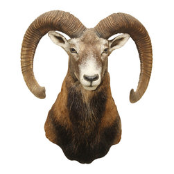 Walls Need Love - Ram Head Wall Mount Decal - If you're a Sagittarius, you don't need anyone's permission to flaunt your style with this dramatic ram's head wall decal. You're an independent go-getter with a creative side, and your walls express it. Place this photorealistic ram on your den or office wall and let your inner trailblazer lead the way to decor as unique as you are.