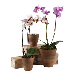 Zodax - Zodax Mango Wood Orchid Pot with Steel Insert - Zodax - Flower Pots / Planters - IN5401 - Mango Wood Orchid Pot with Steel Insert