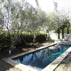 Mediterranean  by Big Olive Trees