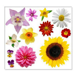 Biggies, Incorporated - Wall Stickies - Flowers - Wall Stickies - Flowers.