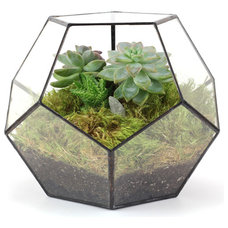 Contemporary Terrariums by Old Faithful Shop
