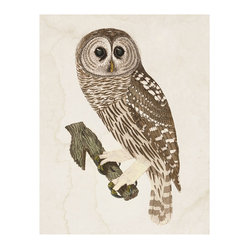 Grand Barred Owl Engraving, Unframed