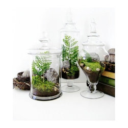 Terrarium Set, Large by Doodle Bird - Fresh, crisp greens add life to a space. Set up a trio of similarly styled terrariums on a buffet to complete the look.