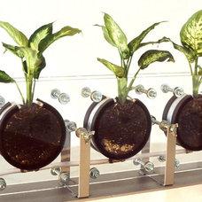 Contemporary Plants by Dodd-Art, Inc.