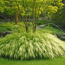 Golden Japanese Forest Grass - I really cannot get over Japanese Forest Grass (Hakonechloa macra 'Aureola', zones 5 to 9). My favorite is the variegated variety. I planted mine under a Japanese maple, and the contrast was genius and it has so much movement.