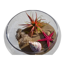 Air Plant Company .com - Pink Orb Airplant  With Pink Star - One of Our Pride and Joy .100%