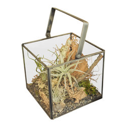 Box Terrarium, Small - These glass terrariums have a vintage and industrial feel with iron frames fitted with simple handles. Frames are not water tight, so best suited for tillandsias or collections of found items.