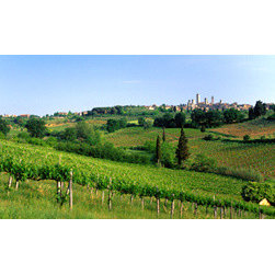 "Biggies, Incorporated - Wall Mural - Tuscany Vineyard - Tuscany Vineyard Wall Mural! Decorate instantly with strong visual impact. Create a gorgeous scenic backdrop with the largest one-piece wall mural on the market. No strips, no paste, no mess. 54"" X 26.75"""