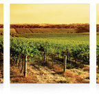 In The Vine - The success of our pictures is all about combining the most hi-resolution images with the best material. Our unique printing process makes the hi-resolution images truly stunning and vibrant. The vivid outstanding colors truly captivate the viewer, and will provide a contemporary feel to any room in your home.