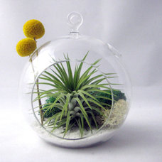 Contemporary Terrariums by Etsy
